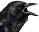 :corbeau: