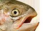 :salmon_says: