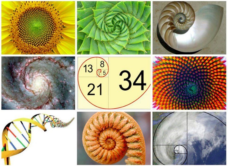 Fibonacci-spirals.jpg